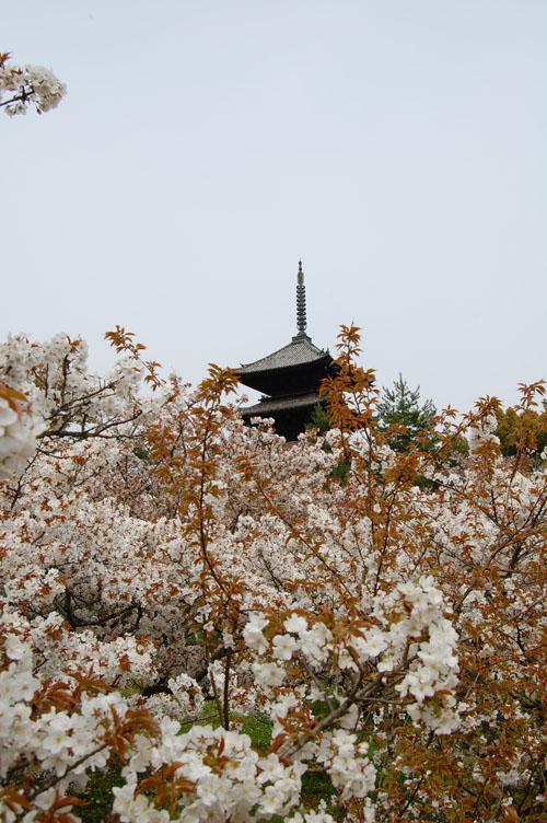 Spring Hiking by GTK